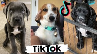 TIK TOK Doggos That Will Make You Laugh ~  Cutest TikTok Puppies