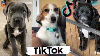 TIK TOK Doggos That Will Make You Laugh ~  Cutest TikTok Puppies