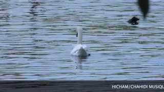 la faunes du lac de Maine ANGERS
