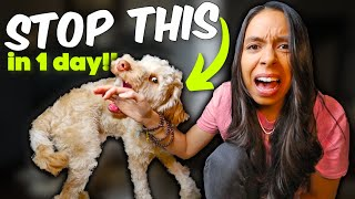 PUPPY BITING STOPPED in ONE day!  Aggressive puppy biting tips that actually work