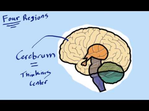 Alcohol and Drug Abuse 3 – The Nervous System