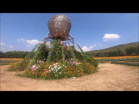 Awesome farm in thailand - thailand travel