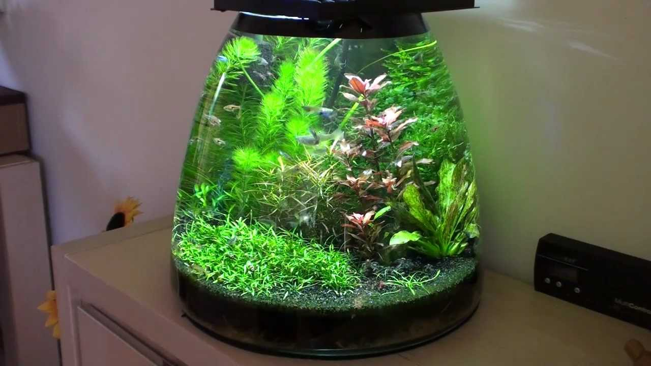 Update Self Made Design Nano Aquarium Youtube