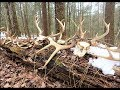 14 Antlers! Shed hunting 2018 Tips & Tactics for NY, PA, NH, VT, ME, MA(Public Land Series Part 5)