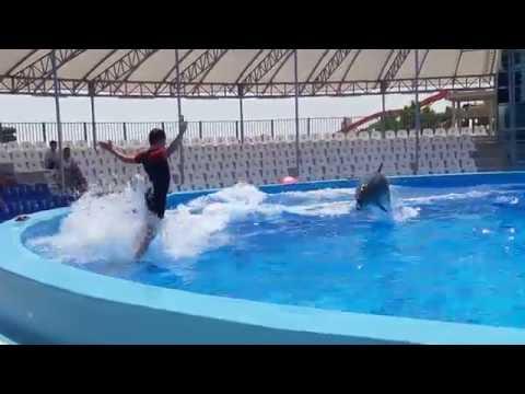 дельфин афалина катает дрессировщика