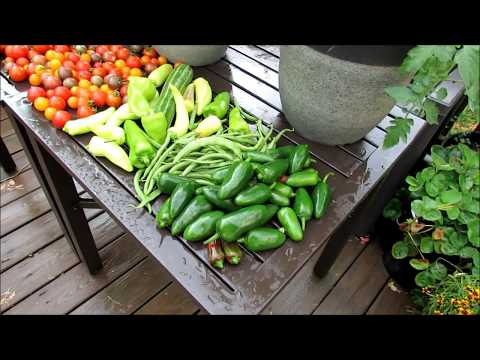 Vegetable Garden Tour Late July:  Tomato Tips, Journal, Ups, Downs & Daily Harvest