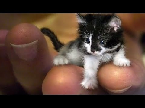 The smallest dog in the world? - YouTube |The Shortest Animal Ever
