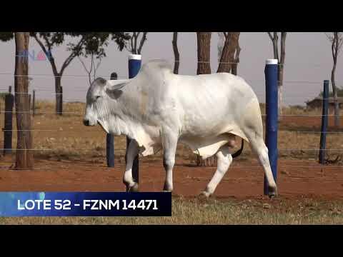 LOTE 52 - FZNM 14471 - NELORE