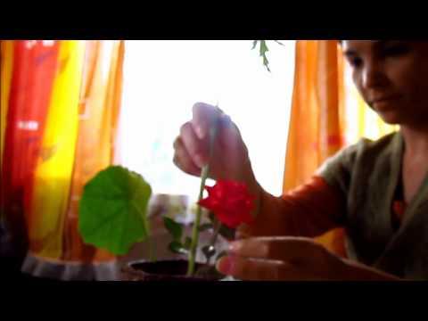 Как сделать икебану