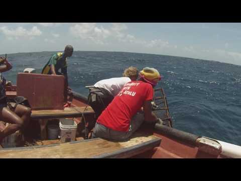 Fishpot Hauling, Barbuda