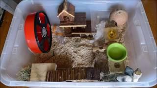 Aménager une bin cage pour souris