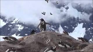 044 2016 Antarctique Manchots