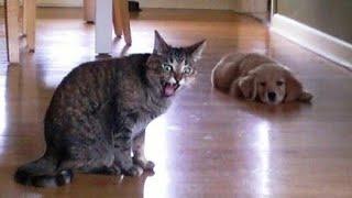 ПРИКОЛЫ С ЖИВОТНЫМИ Смешные Животные Собаки Смешные Коты Приколы с котами Забавные Животные 86
