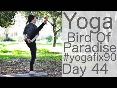 34 Minute Yoga to Bird of Paradise (with a heckler!)  Day 44 Yoga Fix 90 with Lesley Fightmaster