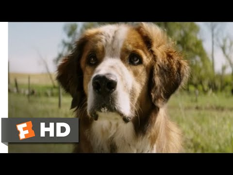 A Dog's Purpose (2017) - I Found You! Scene (8/10) | Movieclips