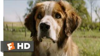 A Dogs Purpose  2017  - I Found You! Scene  8/10