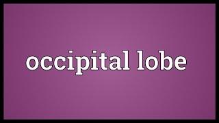 Occipital lobe Meaning