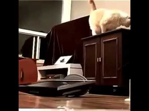 cat-makes-a-mistake
