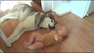 Husky and baby's friendship