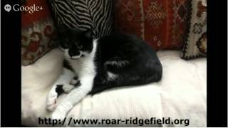 Ct No Kil Shelter Ridgefield Operation For Animal Rescue Ct No Kil Shelter