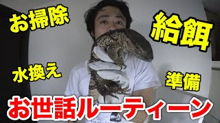 【ヘビ・トカゲ】爬虫類部屋メンテナンスのルーティーンを動画撮ってみた。