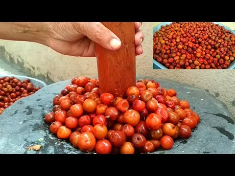 Sweet sour jujube fruits recipe making traditional indian sweet sour jujube fruits recipe making traditional indian berries pickle with forumfinder Choice Image