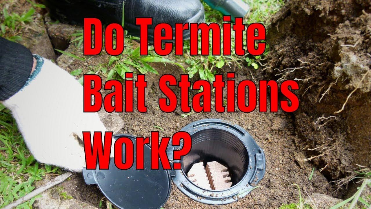 Do Subterranean Termite Bait Stations Work? ????