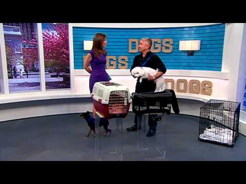 Cesar Millan's summer safety pet tips