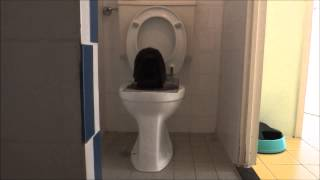 rabbit using normal toilet