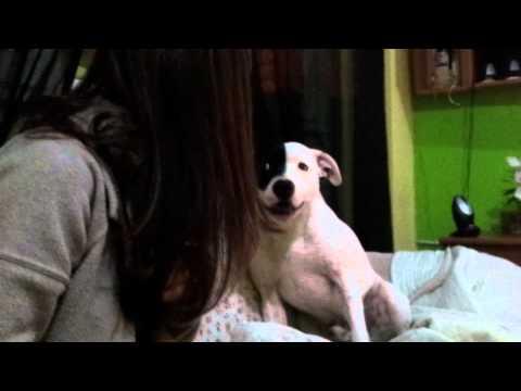 Mi perro discute con mi novia