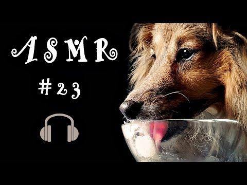 ASMR #23 Eating Sounds Peanut Butter Ice Cream Sheltie Dog (Shetland Sheepdog)