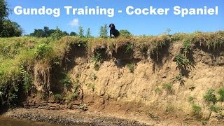 Cocker Spaniel - Gundog Training