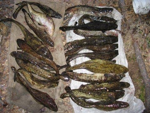 рыбалка с острогой