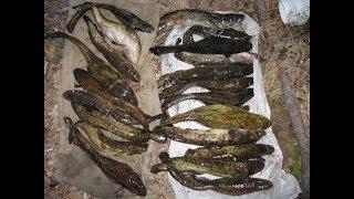 Рыбалка острогой,  ночная  Рыбалка в Казахстане