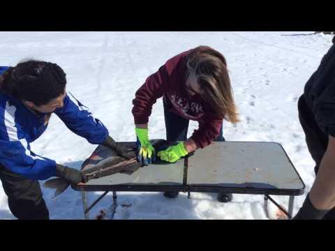 Ice Fishing In Kotzebue Alaska!  Shee Fish.
