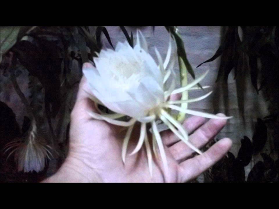 mi jardin video de plantas con flores fotos de flores hermosas cactus y suculentas jardines youtube