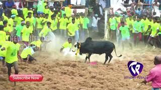 வம்பனில் அசத்திய காளைகள் 2018
