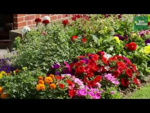 How to plant an annual border with Van Meuwen
