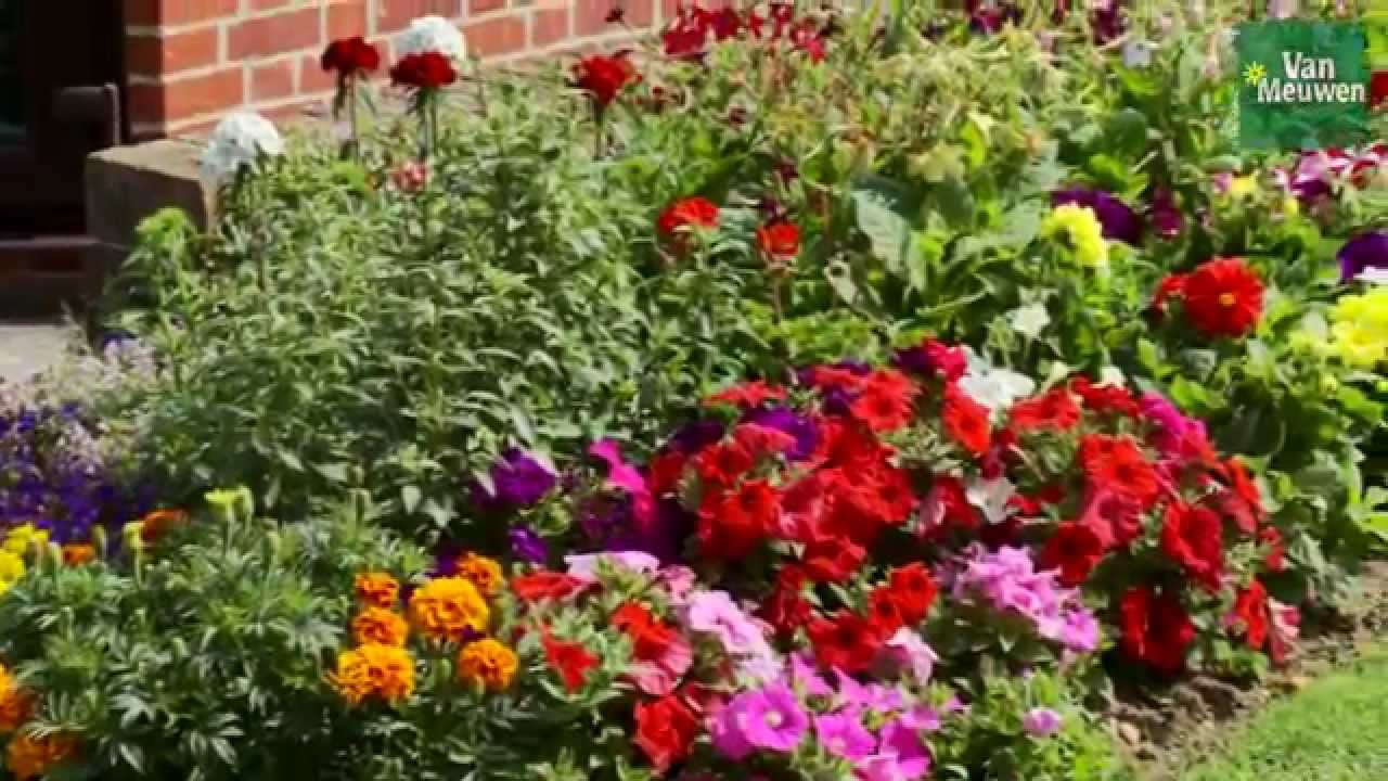 How To Plant An Annual Border With Van Meuwen Youtube