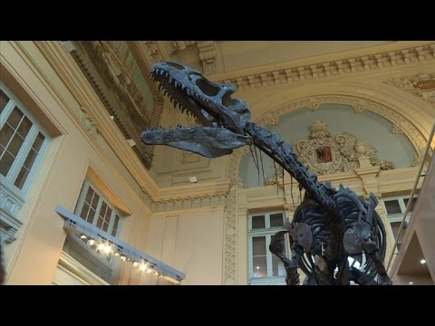 Mystery dinosaur skeleton to be auctioned in Paris