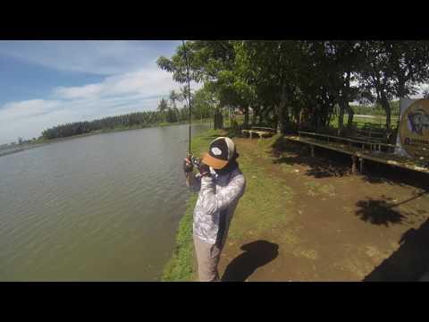 Lift and Fall Technique for Barramundi fishing