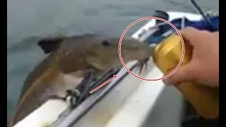 Chuyện có thật: cá trê chui mộ thành tinh, nhảy lên mạn thuyền uống bia tòm tọp, mấy phút trên cạn.