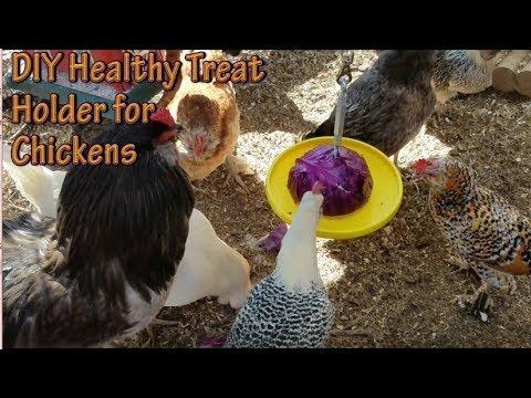 Diy Chicken Treat Holder Youtube