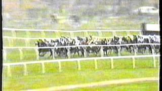 1991 - Cheltenham - Triumph Hurdle - Oh So Risky