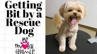 Forgive me I am a rescue dog thumbnail