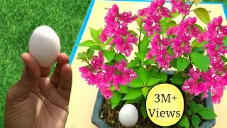 Best free fertilizer for any plants | 3 Easy ways to use Eggshell in gardening
