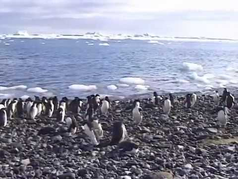 A voyage to  Antarctica (Part 5 of 7)