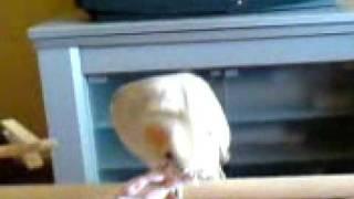 Kiwi Y Margarita Comiendo Pipas Y Jugando