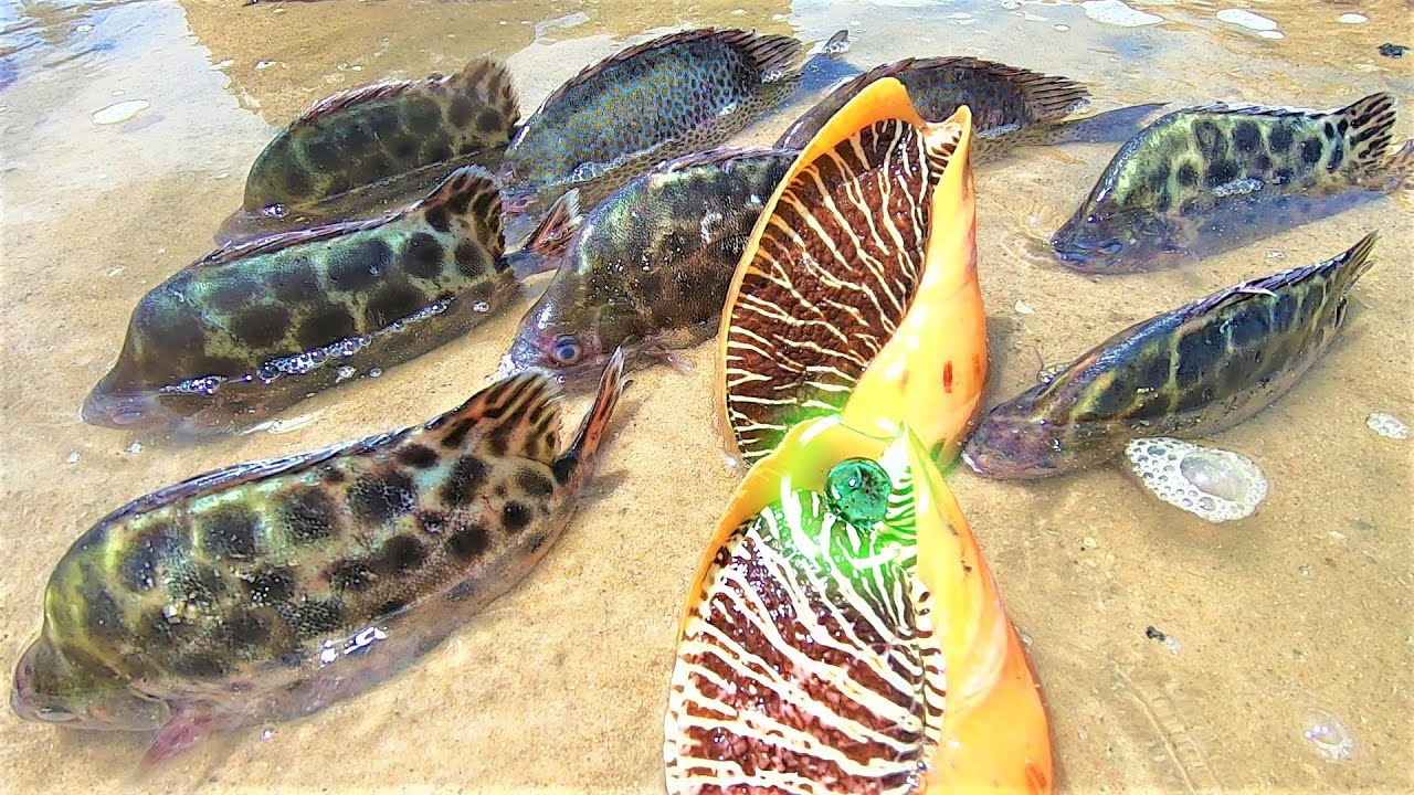 """赶海碰上毒死的鱼群?还有两个深海大螺,一颗绿到发光的""""宝珠"""""""