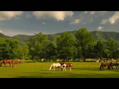 Smoky Mountain National Park- Quick look at the Top attractions video